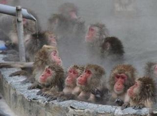 温泉サル2.jpg